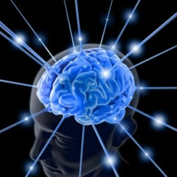 45260-brain-763982-1