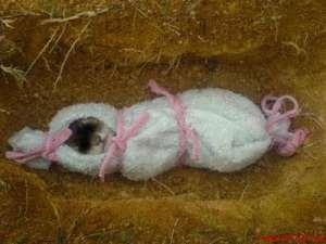 kucing dikubur